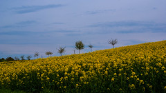 Beautiful Day (AVie Fotografy) Tags: trees beautiful field spring day tag feld bloom frhling schner blhen bme