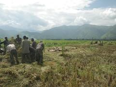 RIMG1072 (WorkingVillages) Tags: congo ruzizi wvi southkivu workingvillages