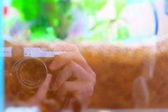 camera (uetomo9) Tags: fujifilm x20