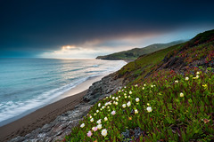 Spring at Rodeo Beach (dsafanda) Tags: ocean california sea spring marin wildflowers marinheadlands rodeobeach