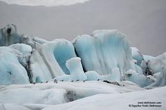shs_n8_053751 (Stefnisson) Tags: bird ice berg birds landscape iceland glacier iceberg gletscher fugl glaciar sland icebergs jokulsarlon breen jkulsrln ghiacciaio jaki vatnajkull jkull jakar s gletsjer fuglar ln  glacir sjaki sjakar stefnisson