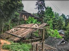 Miao Village (Immagini 2&3D) Tags: china guizhou cina basha miaovillage