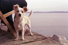 Luna (franz_brocchi) Tags: dog pets trieste friuliveneziagiulia