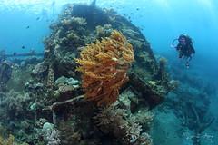 Wreck Dive (Randi Ang) Tags: bali canon indonesia photography eos ship underwater angle wide dive scuba diving fisheye ang wreck 15mm randi 6d javanese amed
