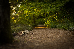 Forest Path (praetorius.moritz) Tags: sunset sun blur forest garden 50mm nikon path warmth depth