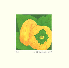 Japanese persimmon (Japanese Flower and Bird Art) Tags: flower art japan modern print japanese persimmon hara kaki lithograph diospyros ebenaceae mikae readercollection