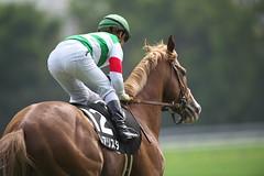 Realista - Fuchu Stakes (arumckF) Tags: tokyo  staygold horserace realista    yugakawada noriyukihori   tokioreality fuchustakes