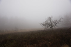 (esmeecadoni) Tags: morning trees light sky mist holland tree nature netherlands fog forest landscape photography woods europe outdoor sony minimal simplicity simple minimalistic drenthe littlethings beautifulearth