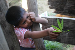Growing because they need to survive (elcalamar) Tags: child cannabis marihuana opio mariguana huecahuaxco