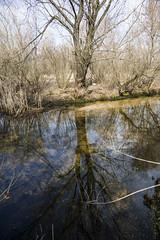 DSC_4815 (kabatskiy) Tags: city urban lake nature landscape spring dump minimal marsh abstracts