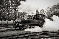 SLJ 9, Mariefred 2013-09-28 (Michael Erhardsson) Tags: 9 september locomotive hst lok svartvitt mariefred rk 600mm 2013 nglok jgj nga smalspr museibana veterantg slj jnkpinggripenbergsjrnvg