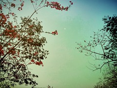 Beneath the same sky. (sahilasanzana) Tags: flowers trees sky silhouette shadesofblue