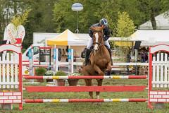 DSC09580_s (AndiP66) Tags: springen hindelbank jegensdorf 2016 23april2016 pferd horse schweiz switzerland kantonbern cantonberne concours wettbewerb horsejumping equestrian sports springreiten pferdespringen pferdesport sport sony sonyalpha 77markii 77ii 77m2 a77ii alpha ilca77m2 slta77ii sony70400mm f456 sony70400mmf456gssmii sal70400g2 andreaspeters jegenstorf bern ch
