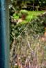 Rugiada (Guido Giachetti) Tags: winter spider drops web details dew dettagli inverno rugiada gocce stille dettaglio deatil ragnatela spidreweb