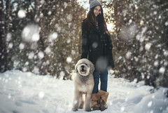 AN AFTERNOON WALK (PATHTIQUE) Tags: california dog snow girl vintage lifestyle 50mm14 adventure poodle vibes labradoodle wander bigbear russiangirl wanderfolk