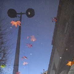 Wet #02 (c-dr-c) Tags: wet water rain puddle eau upsidedown outdoor bordeaux pluie reflets reflects flaque mouill lenvers
