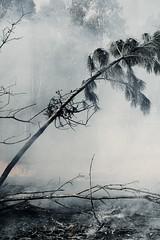 Cenicero. (elojeador) Tags: bosque rbol fuego silvestre palmera incendio ceniza cuadro exposicin elojeador centroandaluzdefotografa