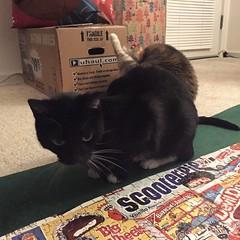 Day 10 (sleepysluggo) Tags: kitties puzzles butthole