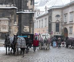 IMG_9098 (jaglazier) Tags: vienna wien horses snow animals austria bay transport january cities stephansdom mammals urbanism carts ststephens streetscapes ststephenscathedral carriages ststephen 2016 1616 carthorses copyright2016jamesaglazier