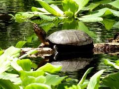 no hay por que correr (jvcluis) Tags: no el oaxaca hay tortuga zona porque disfrutando correr clima arqueologica copalita