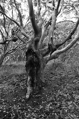 0D6A5774 - Glenrock State Conservation Area (Stephen Baldwin Photography) Tags: trees blackandwhite water monochrome newcastle walking landscape bush sand state earth conservation australia nsw area glenrock