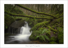 Fall (shaun.argent) Tags: trees winter tree texture nature water weather forest woodland waterfall moss woods stream seasons yorkshire hackfall shaunargent