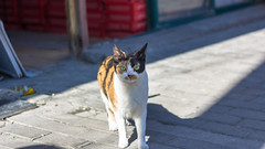 | Cat #Day32/366 (Owen Wong (Thank you)) Tags: pet cat shanghai meow   day365