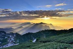 ~~ Oblique light on Tea fields (Shangfu Dai) Tags: sunset fog clouds landscape nikon taiwan formosa    alishan d800        af20mmf28d  xinding