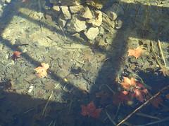 (Psinthos.Net) Tags: winter fish water leaves aquarium day valley february fishes sunnyday fallenleaves kamari artificiallake  winterleaves  fasuli psinthos          fasouli     gizani   psinthosvalley  fasoulivalley     gizanni   kamaripsinthos    gizanimuseum gizanipsinthos gizaniaquarium gizanifish