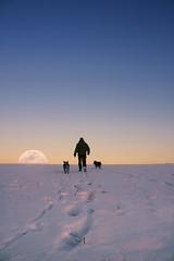 In the footsteps Yettiho (frantiekl) Tags: world winter friends sky moon snow dogs frost horizon hill january footprints run fullmoon australiancattledog eveninglight planetearth