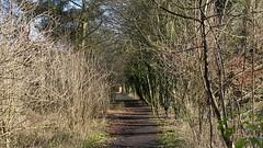 Lavenham Walk (Tammy Jackson) Tags: wood trees winter suffolk path walk lavenham