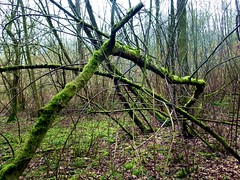 2016-02-24 secret wood (65) (april-mo) Tags: wood trees winter france nature hiver baretrees nord bois secretwood boissecret