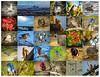 January 2016 photo collage (pekabo90401) Tags: collage canon cityscape friendship adventure sparrow birdwatching scrubjay osprey americankestrel kestrel quail malibulagoon redtailedhawk lightroom poisonoak annashummingbird coopershawk lifer bushtit campdavid whitecrownedsparrow ballonacreek spottedtowhee eurasianwigeon californiaquail toyon redbreastedmerganser camaraderie ilovela mewgull oaktitmouse losliones wrentit southerncaliforniabirds lifebird pacificavenuebridge sx50 vividcamerasetting inceville liferbird canonsx50 lightroomcollagetemplate birdwatchinglosangeles pekabo90401