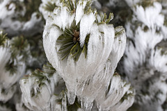 _MG_1044 (schamrock77) Tags: winter italy mountain ice freezing natura inverno montagna friuli ghiaccio galaverna canon6d 35f2is