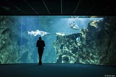 Aquarium La Rochelle! (Arthur Janin.) Tags: leica art digital 35mm la arthur photographie f14 sl mm 35 summilux asph rochelle janin fle 601 typ
