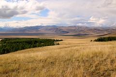 Steppe and Taiga in southern Siberia, Altai Republic, Russia. (Pterodactylus69) Tags: russia siberia steppe russland altai sibirien sdsibirien