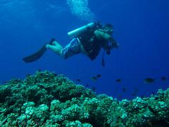Neutral Buoyancy (Eric W_) Tags: vacation fish coral fiji scuba diving scubadiving gary diver wananavu