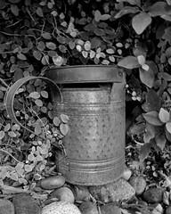 Bucket, bush, rocks (Are W) Tags: arizona bucket bush rocks glendale az panasonic topaz glendalearizona dmclf1