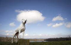 (Katarina Drezga) Tags: dog pet pets lake dogs clouds perros pas dogphotography petphotography dogoargentino nikkor1855mm nikond3100