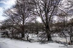 2015_Aiaraldea_elurtuta_elurra (aiaraldea.com) Tags: elurra nerbioi gorobel aiaraldea urjausi