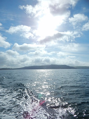 Plymouth-201506-50-SummerDay-OnTheSea (Tony J Gilbert) Tags: macro marine underwater plymouth diving scylla jameseaganlayne nikond300 handdeeps wwwdivingplymouthcom ceeking hilseapointrocks
