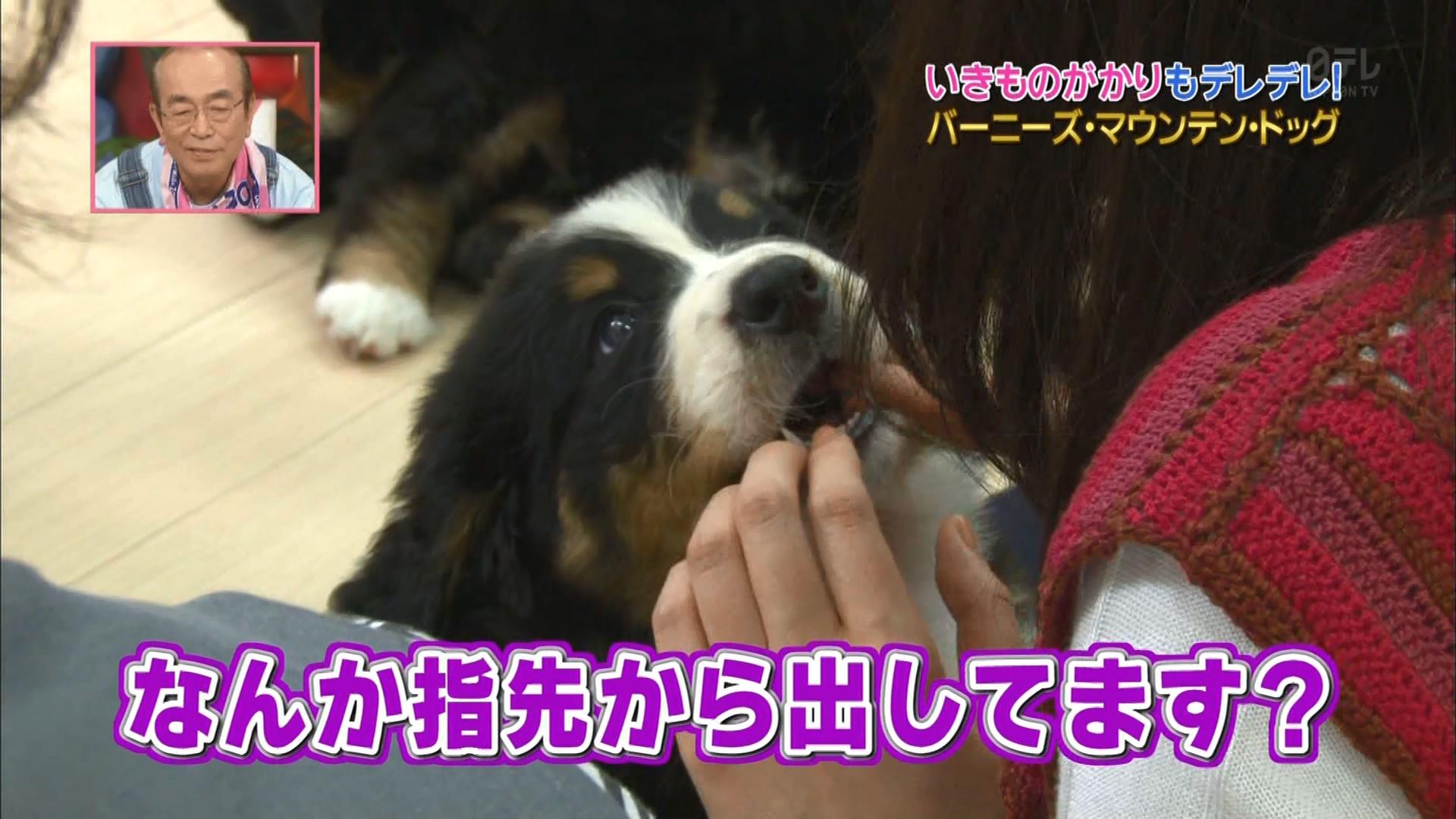 2016.02.27 全場(天才!志村どうぶつ園).ts_20160227_204530.628