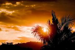 sunset with palm leaves... (digitearte) Tags: skyskape