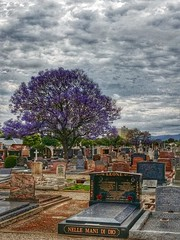 North Road Cemetery (chiyowolf) Tags: cemetery graveyard purple headstones jacaranda purpleflowers jacarandatree
