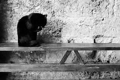 Galgano (valerologan) Tags: italy italia bn tuscany siena toscana gatto nero sangalgano gattonero