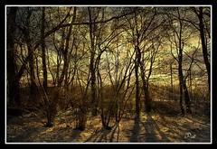 Sunshiny day (patrick.verstappen) Tags: trees winter sun texture photo google nikon flickr belgium image pat sigma hdr textured facebook picassa twitter gingelom ipernity d7100 pinterest ipiccy picmonkey