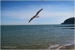 Spring is finally here!!! (stubyrnesphotography) Tags: uk sea england seagulls beach nature water landscape outdoors island sand unitedkingdom isleofwight southcoast shanklin landscapephotography canong7x