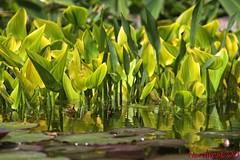 Algo de primavera... // Some spring ... (Nordwest700) Tags: verde green primavera canon spring 7d canon7d nordwest700
