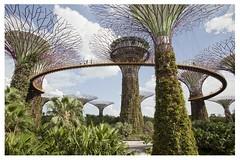 Park Marina bay, (singapur) (alvaromoneo) Tags: park parque plant marina garden bay plantas jardin cielo bahia future pasarela alvaro moneo singapur gangway futurista isiegas alvaromoneohotmailcom