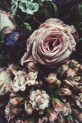 Withering (55Laney69iphone) Tags: old flowers rose analog vintage quiet pastel peaceful retro faded withered iphone 5s softtones withering softcolors vsco